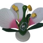 Modelul florii dicotiledonate