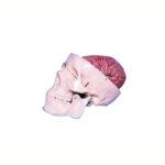 Craniu clasic cu encefal din 8 părți, mulaj